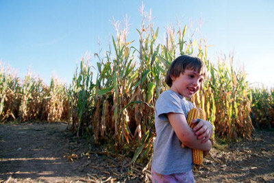 A five-year-old girl makes her way out of a 10-acre cornfield maze in New Mexico. The farmer who built the maze is using tourism as a way to supplement income.