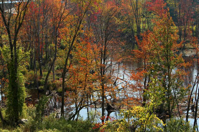 Autumn foliage in Winchendon, Mass. See more pictures of trees.