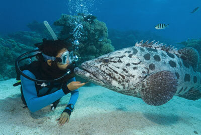 Marine Life Image Gallery DAN or the Divers Alert Network offers services for sport and recreational divers. See more pictures of marine life.
