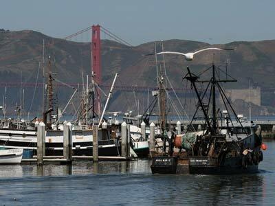 Fishing boats at San Francisco harbor