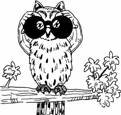 Is your night vision as good as an owl's?