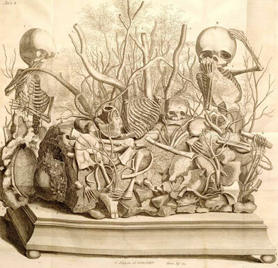 An illustration of one of Frederick Ruysch's dioramas featuring fetal skeletons and preserved tissue. Note the handkerchief.