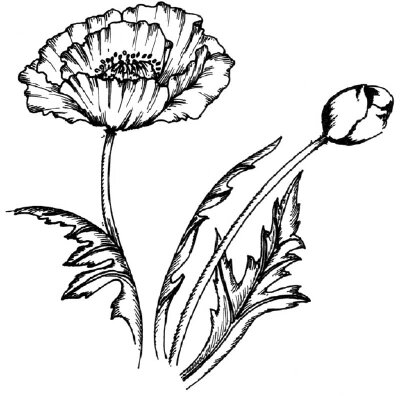 Flower Image Gallery Learn how to draw this poppy. See more pictures of flowers.