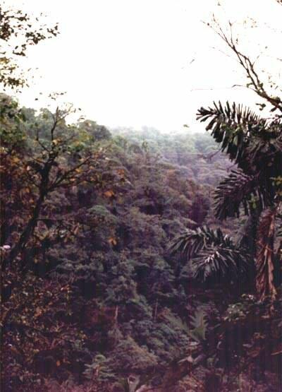 Rainforest land in Costa Rica