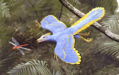 archaeopteryx-illustration.jpg
