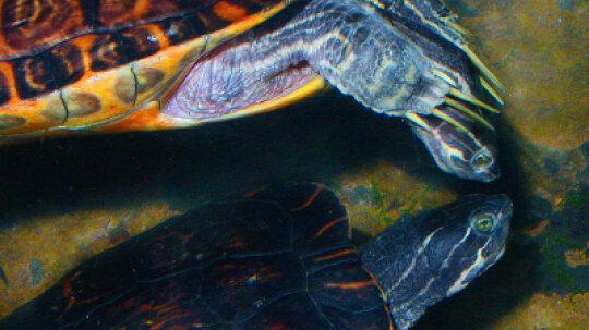 Family Vacations: Tennessee Aquarium
