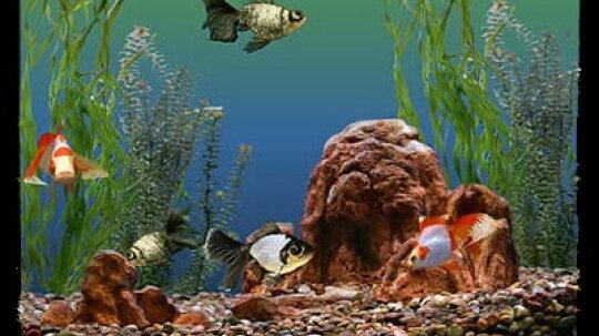 How to Choose Aquarium Fish