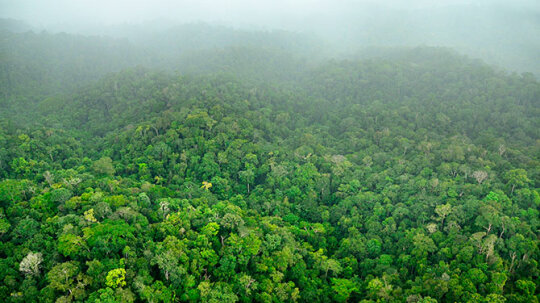 How Rainforests Work