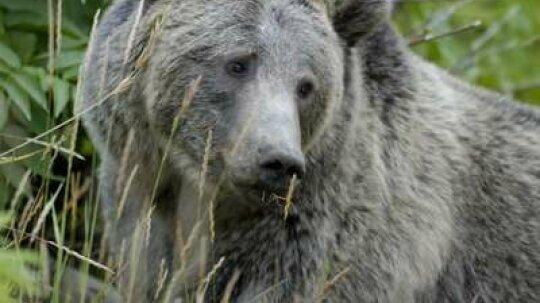 15 Tips for Surviving a Bear Encounter