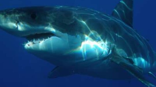 15 Tips for Surviving a Shark Attack