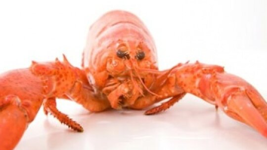 Is there a 400 pound lobster out there?