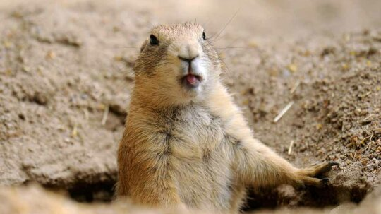5 Critters to Beware Of While You're Camping in the Desert