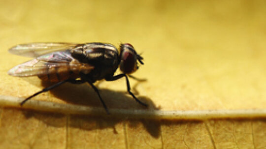 5 Ways to Control Fly Breeding Sites