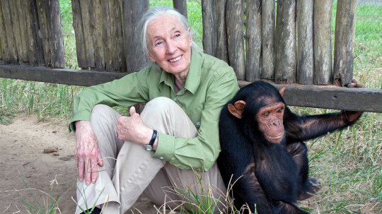 Jane Goodall: A Global Face for Global Peace