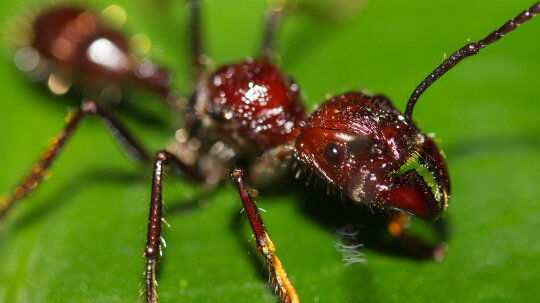 Which Insect Inflicts the Most Painful Bite?