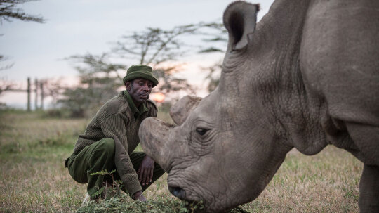 Does Goodbye to the Last Male Northern White Rhinoceros Mean the End of the Species?