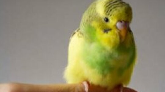 What Are Some Symptoms of Feather Allergy?