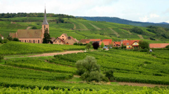 Ultimate Guide to the Alsace Wine Region