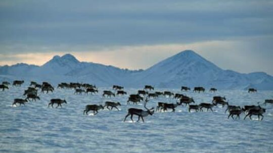 How Animal Migration Works