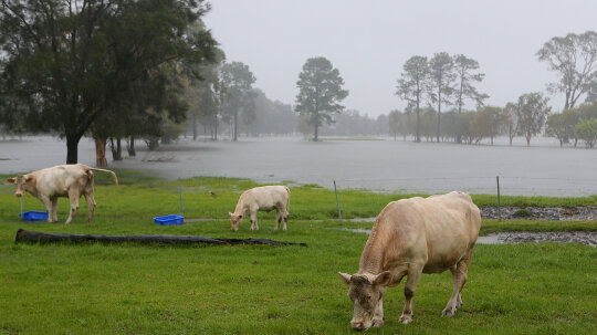 10 Ways Animals Supposedly Predict the Weather