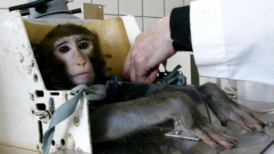 How Animal Testing Works