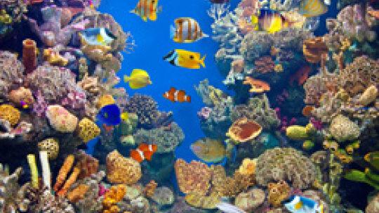5 Aquarium Cleaning Tips
