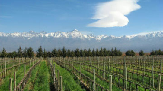 Ultimate Guide to Argentinian Wines