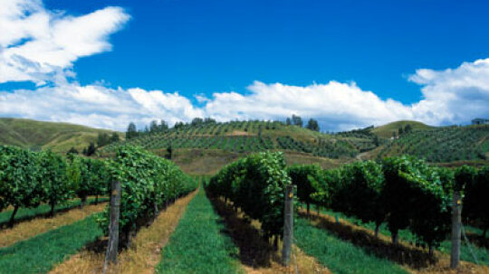 Ultimate Guide to the Bay of Plenty Wine Region
