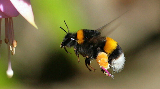 Bees Stopped Buzzing During the 2017 Solar Eclipse