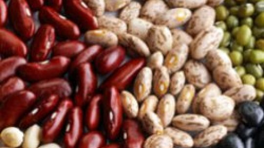 Health Benefits of Dried Beans, Nuts, and Seeds