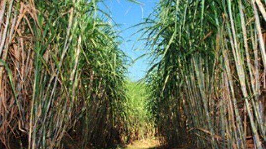 Biofuels vs. Fossil Fuels