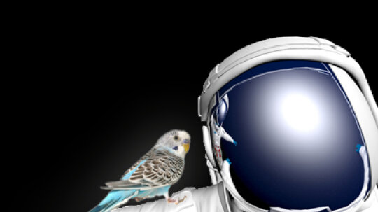 What if an astronaut took his/her pet bird into space? Would it still be able to fly?