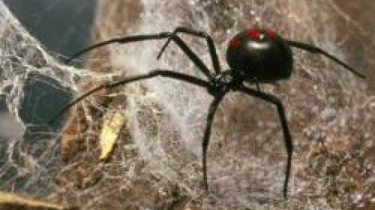 Arachnid Pictures