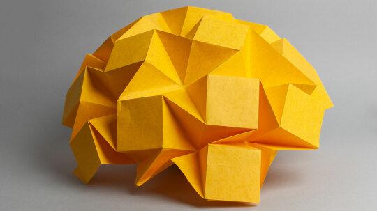 The Big, Bad Brain Quiz
