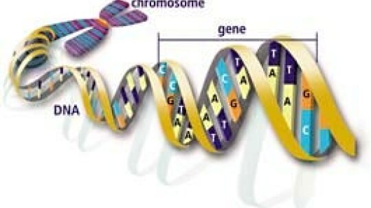 How DNA Evidence Works