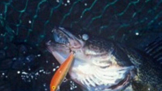 How to Choose Walleye Baits and Lures