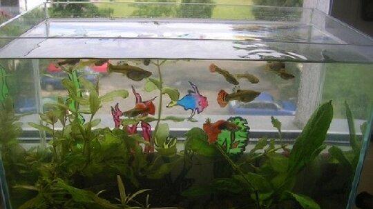 How to Choose Aquarium Equipment