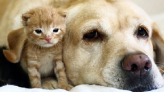 5 Tips for Cleaning Up Pet Hair
