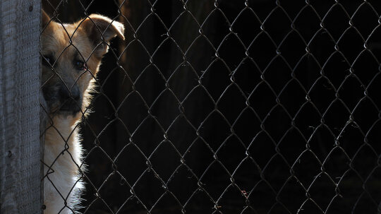 Connecticut Becomes First State to Appoint Legal Advocates for Abused Animals