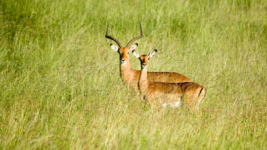 How to Conserve Hunting Habitats