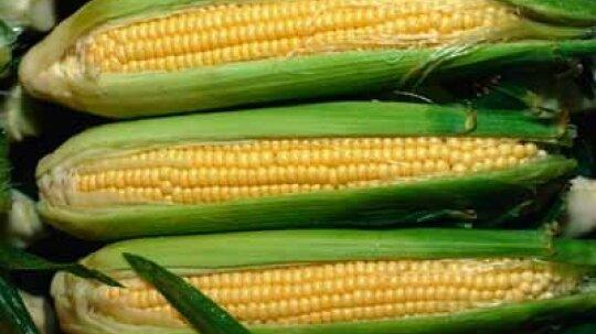 Corn: Natural Weight-Loss Food