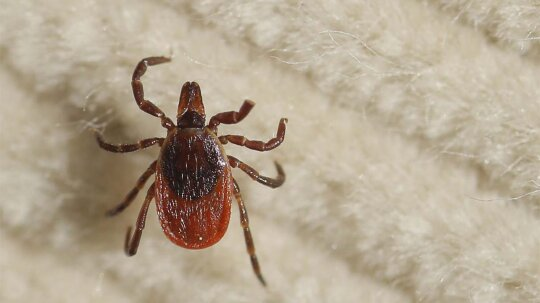 Tick- and Mosquito-borne Diseases on the Rise