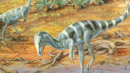 Modern Dinosaur Discoveries