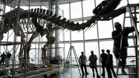 How can soft tissue exist in dinosaur fossils?