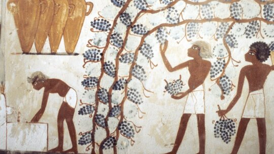 How did people discover wine?