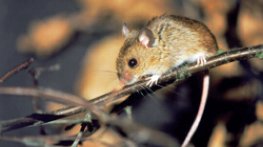5 Tips for Disinfecting After Getting Rid of Mice