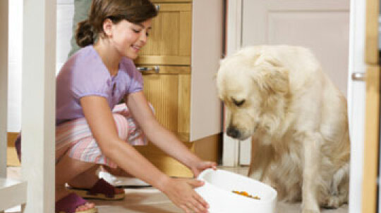 How do dogs' nutritional needs change as they age?