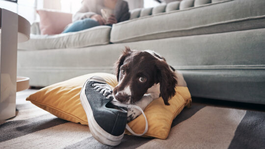 Do Dogs Go Through Puberty?