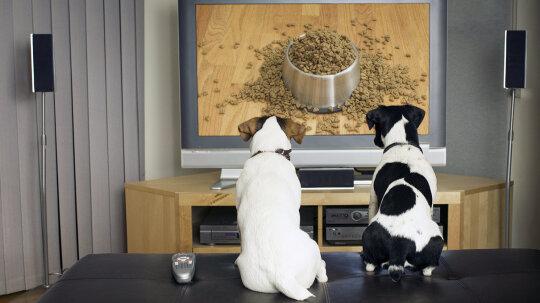 DOGTV: The HBO for Fido?