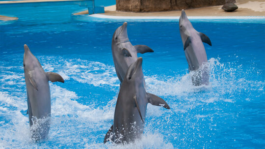 How Billie the Dolphin Taught Her Flippered Friends to Bust a Move
